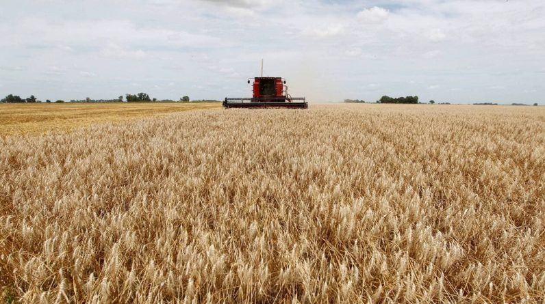 Agricultura.  Na Argentina, tanques gigantes de mudas são resistentes