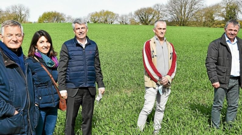 Como a Bretanha quer desenvolver a agricultura renovável - a economia