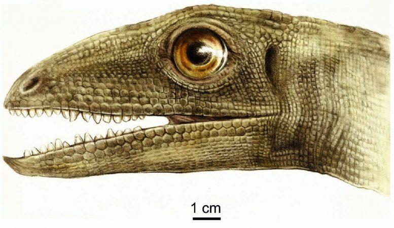 Celsaurus opulensis