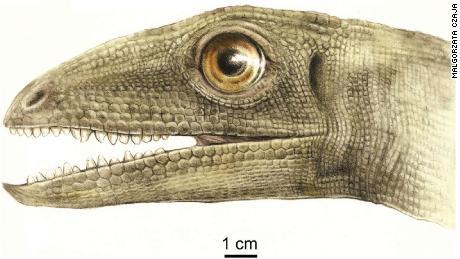 Na foto, está uma reconstrução artística do Celsaurus opulensis.