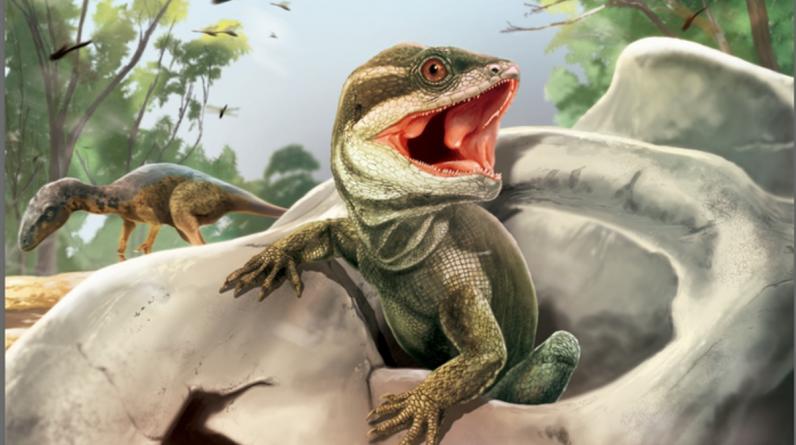Répteis fósseis interessantes fornecem pistas sobre a origem de cobras e lagartos