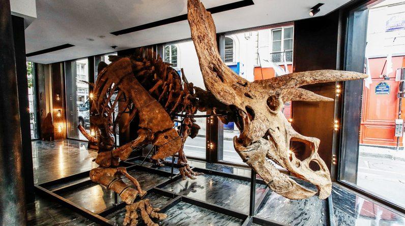 O maior esqueleto de triceratops do mundo pode render mais de US $ 1,4 milhão em leilão