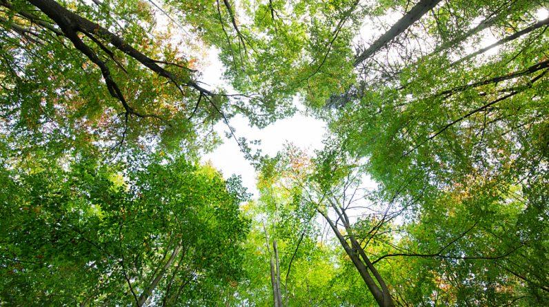 O estudo descobriu que um terço das espécies de árvores ameaçadas do mundo