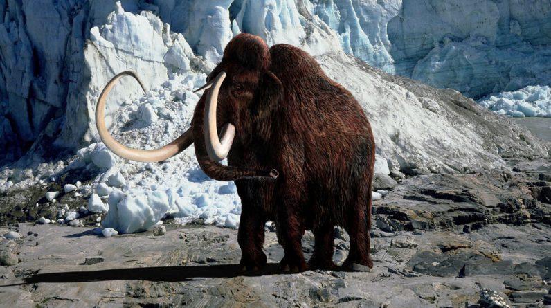 Uma nova empresa com uma missão selvagem: trazer de volta o mamute peludo