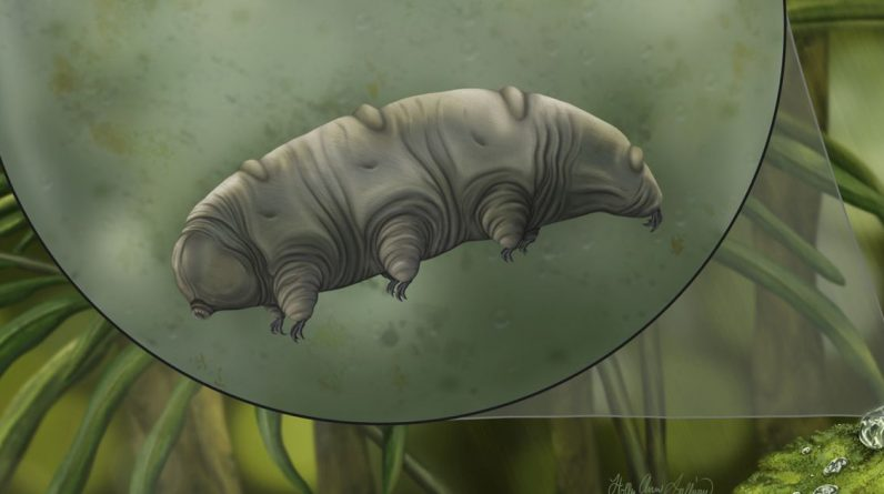 Tardígrados de 16 milhões de anos presos na descoberta de âmbar 'uma vez em uma geração'